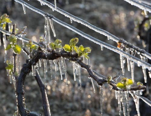 Agriculteurs touchés par le gel avril 2021 : la chambre d'agriculture et la MSA se mobilisent