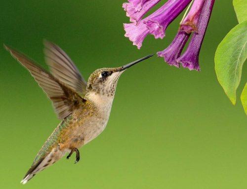 Concours «les colibri du patrimoine suzien»